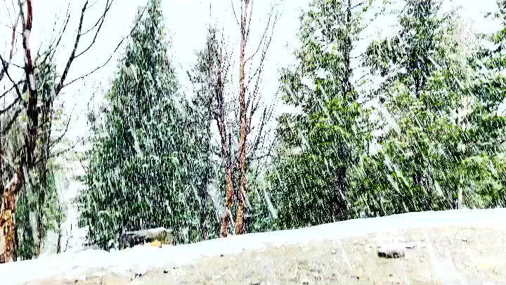 It was love at frost sight.  . . . . #snowfall #snow #winter #nature #mountains #snowing #snowflakes #photography #snowday #photooftheday #winterwonderland #travel #himachal #himachalpradesh #india #cold #himalayas #snowy #instagood #travelphotography #naturephotography #manali