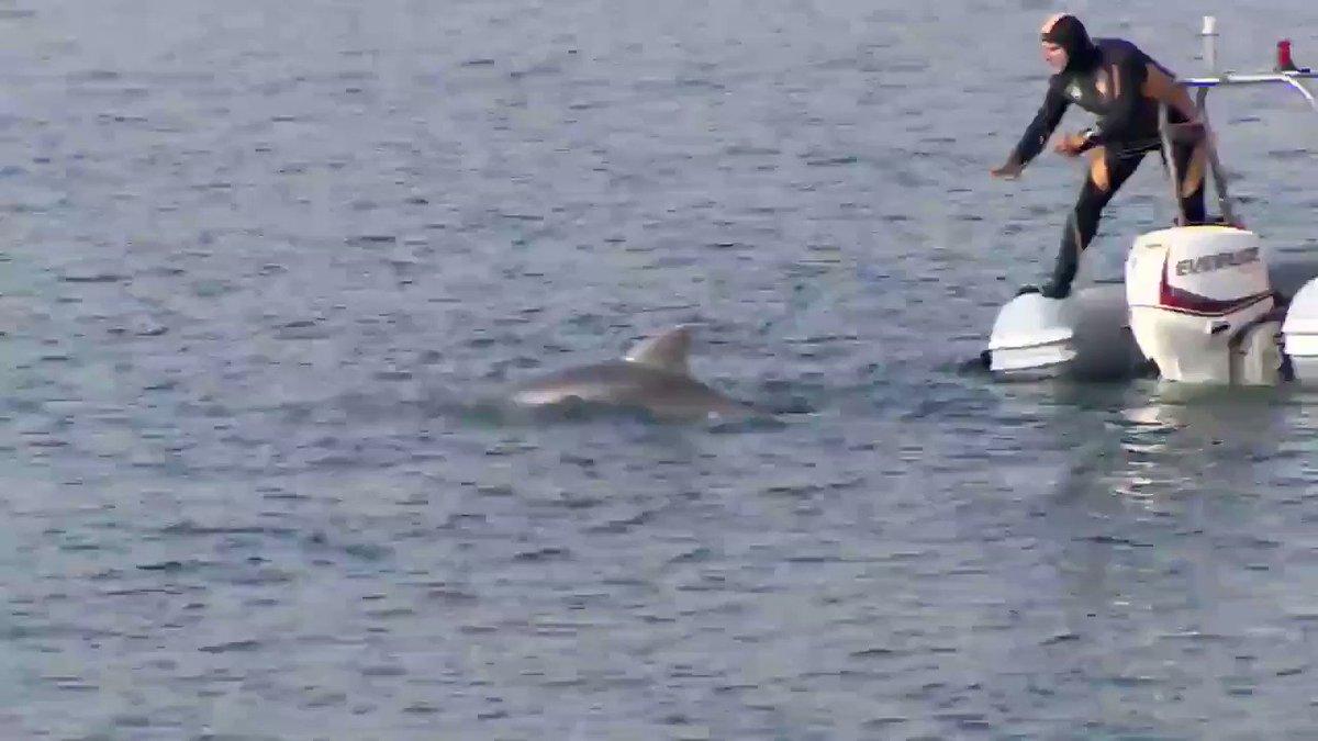 @cnnturk Bizim adımız su altı su üstü arama kurtarma! Belediye görevlisi değil!  İtfaiye (Dalgıç) #itfaiye #scubadiving #recovery #dolphins
