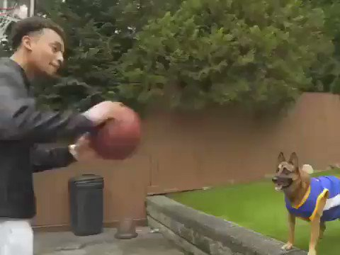 The coolest assist ever ... !!🐶🏀😮  ( k9_jester | Ig ) https://t.co/6h6BqDAkNo
