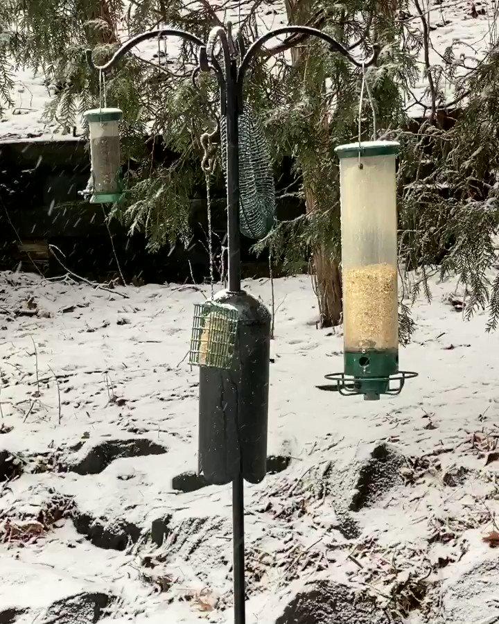 #birds #birdfeeder #snowing #february28 #minnesota
