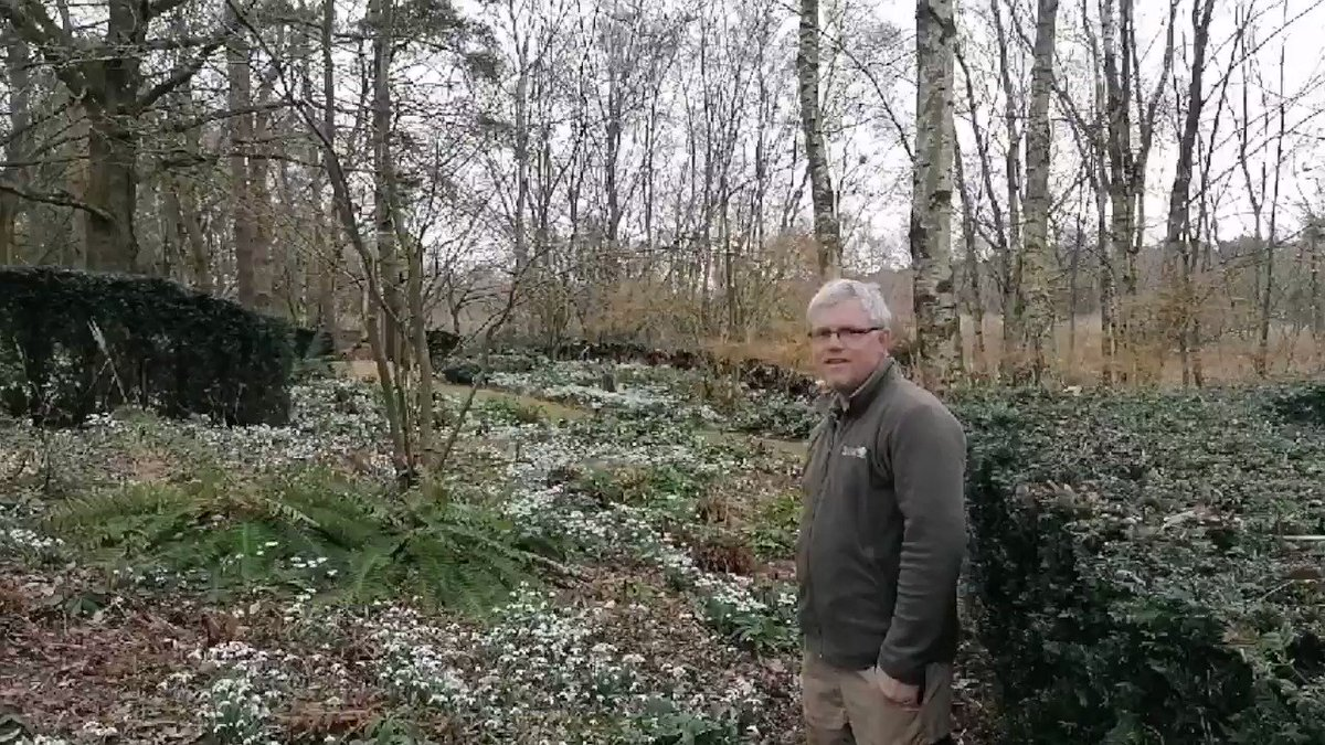 Image for the Tweet beginning: Snowdrops, hellebores and beautiful aromas