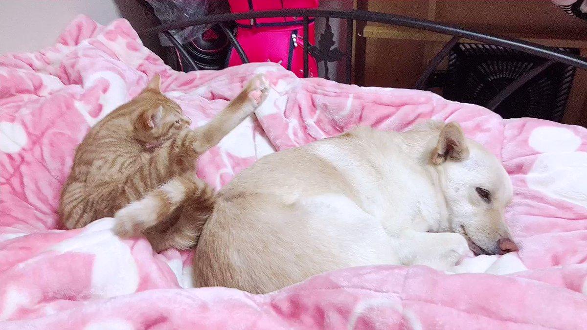 おはようございます☀  #猫がいる幸せ #犬のいる暮らし #いぬ #猫のいる暮らし #保護犬 #保護猫 #茶トラ #雑種犬 #猫好きさんと繋がりたい #犬好きさんと繋がりたい #CatsOfTwitter #dogsoftwitter #cat #犬 #dog #猫のいる生活 #猫 #dogs #cats
