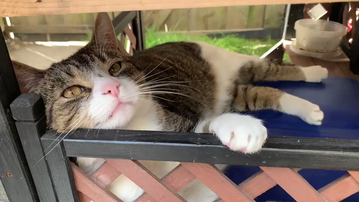 Another busy day 🤔🙄😹 @Greta__Sophie #sundayvibes #SundayFunday #Sunday #cats #CatsOnTwitter #tabbytroop #GoodNightTwitterWorld