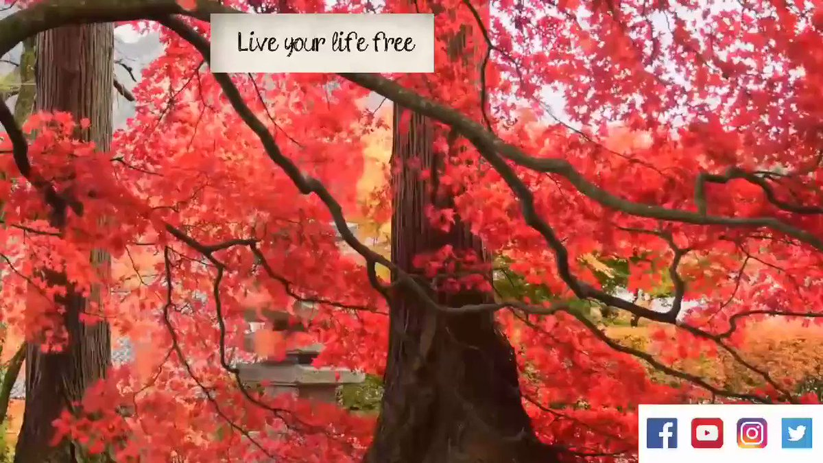 Invite yourself to free stress life, make a bit calm       #youtube #instagram #FacebookLive #youtubelive #Twitter  #soothingmusic #relaxation #calmmusic #natural #yoga #meditation #spa #lightmusic #relaxingtime