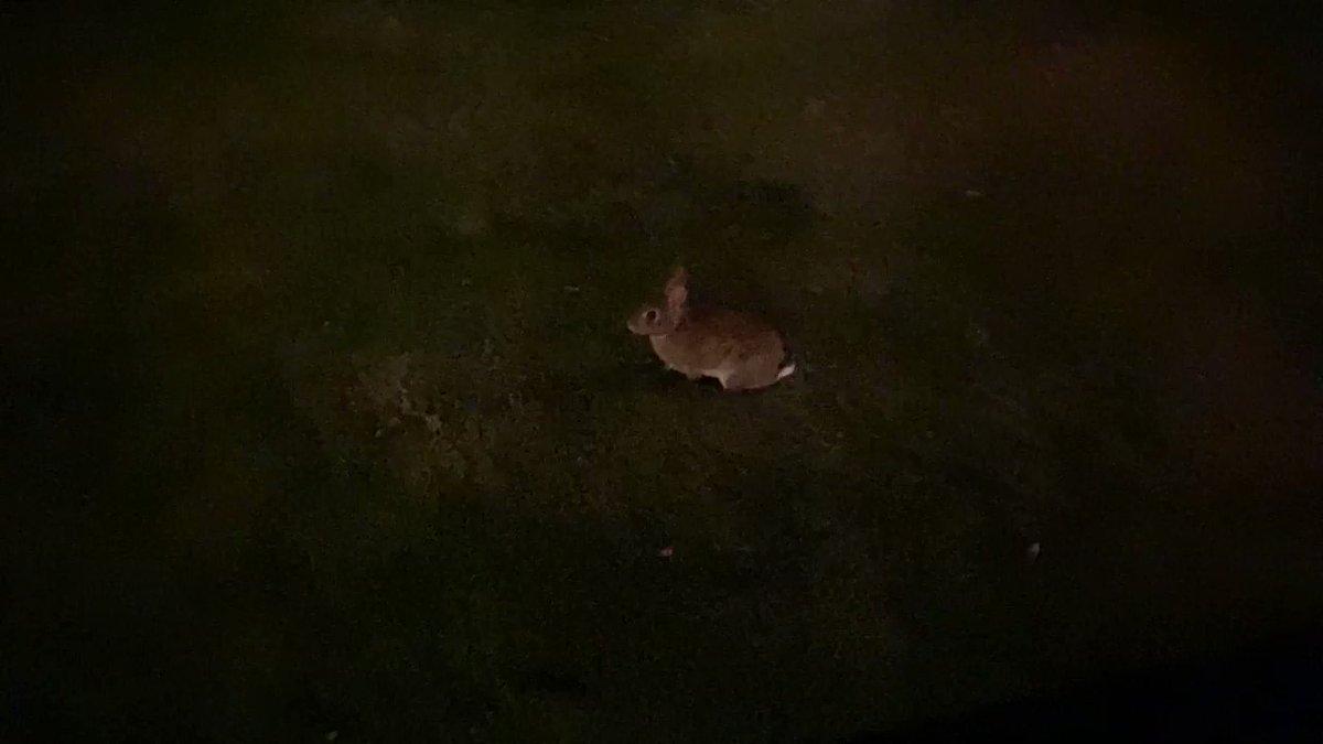 We saw an #Epcot bunny!