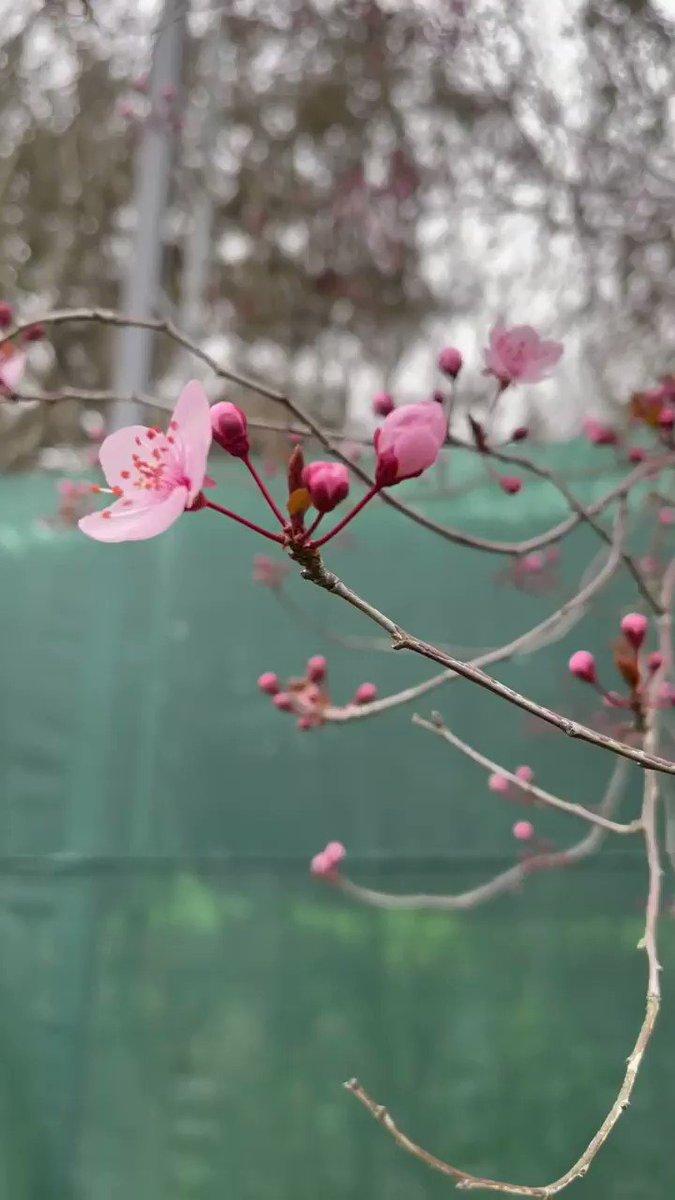 Feliz inicio de la semana y del mes de marzo!!!!