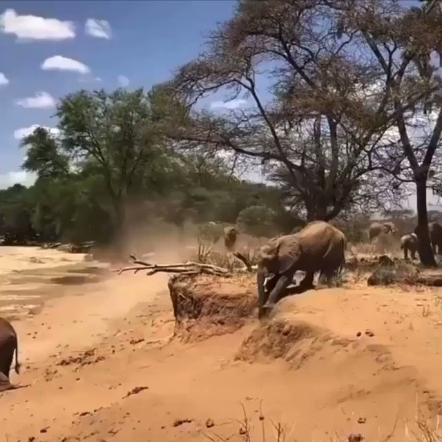 This mother elephant showing her baby boy how to descend from a ledge is the Twitter content I needed today...