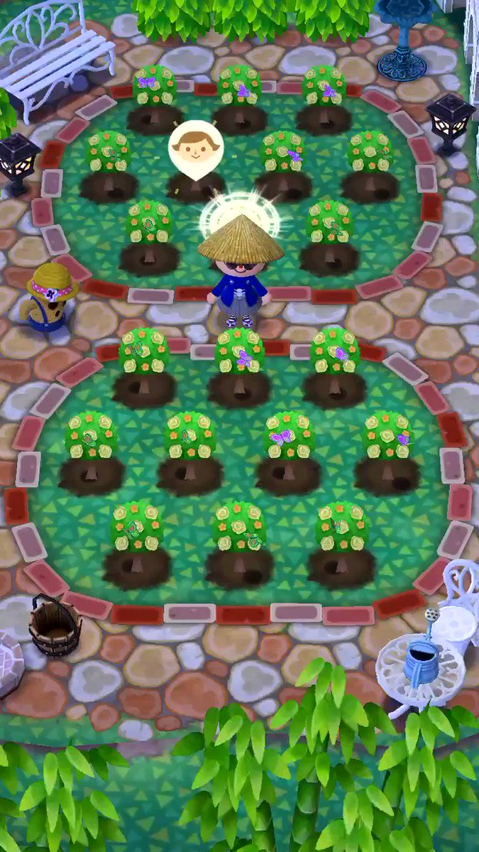 Collecting bugs for Katie's Hedge Maze Gardening Event in #AnimalCrossingPocketCamp! 🐈🌳 #AnimalCrossing