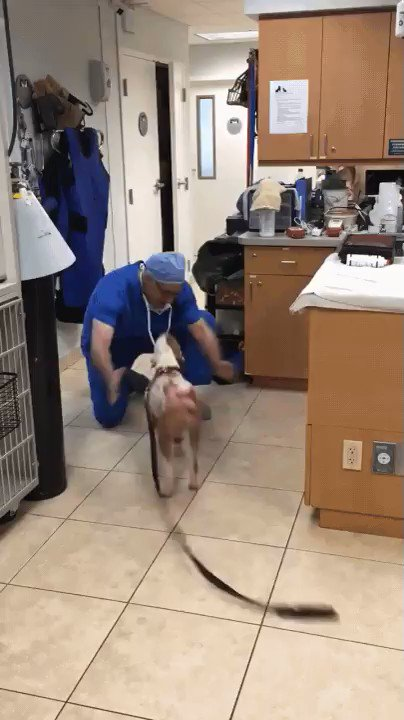 Dog who had burns from a fire is reunited with the vet that treated him.. 🥺 https://t.co/Yfr4ZOW1Zz