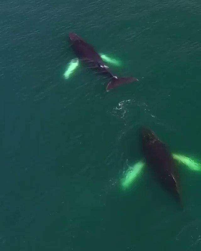 Estas ballenas están haciendo arcoíris en la Antártida #AlwaysherewithMew #SoulofaNation #iubb