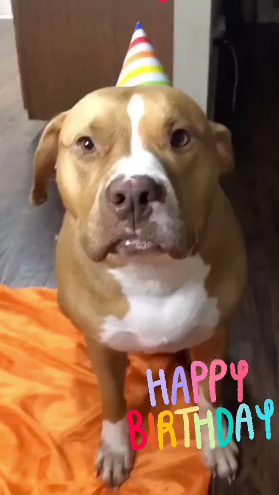 #AdoptionPupdate - We got this adorable video of TJ's 3rd #birthday #party and had to share the cuteness with you all! Thx for the pupdate & thank you for adopting!  We're over capacity in med/lrg🐕 & need help with adoptions & fosters.  Name Your Price through March 7th!