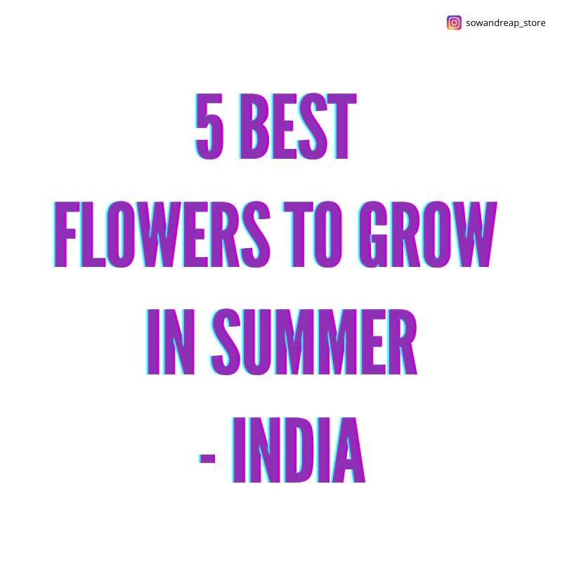 For all those planning to plant flowers this summer, you're welcome :D #gardening #flowers #flowerphotography #gardeningtips #GardeningFun #indianflowers #greenindiachallenge #Garden #gardenblog #sowandreap