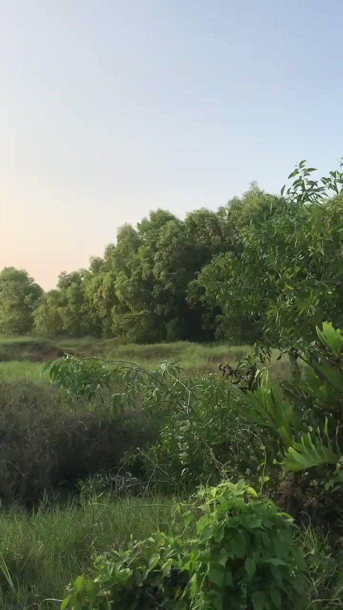 Refreshing Natural Greenery🌱 #greenindia  #greenery