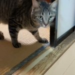 台所は入ってはいけない場所だとしっかり理解している!賢い猫