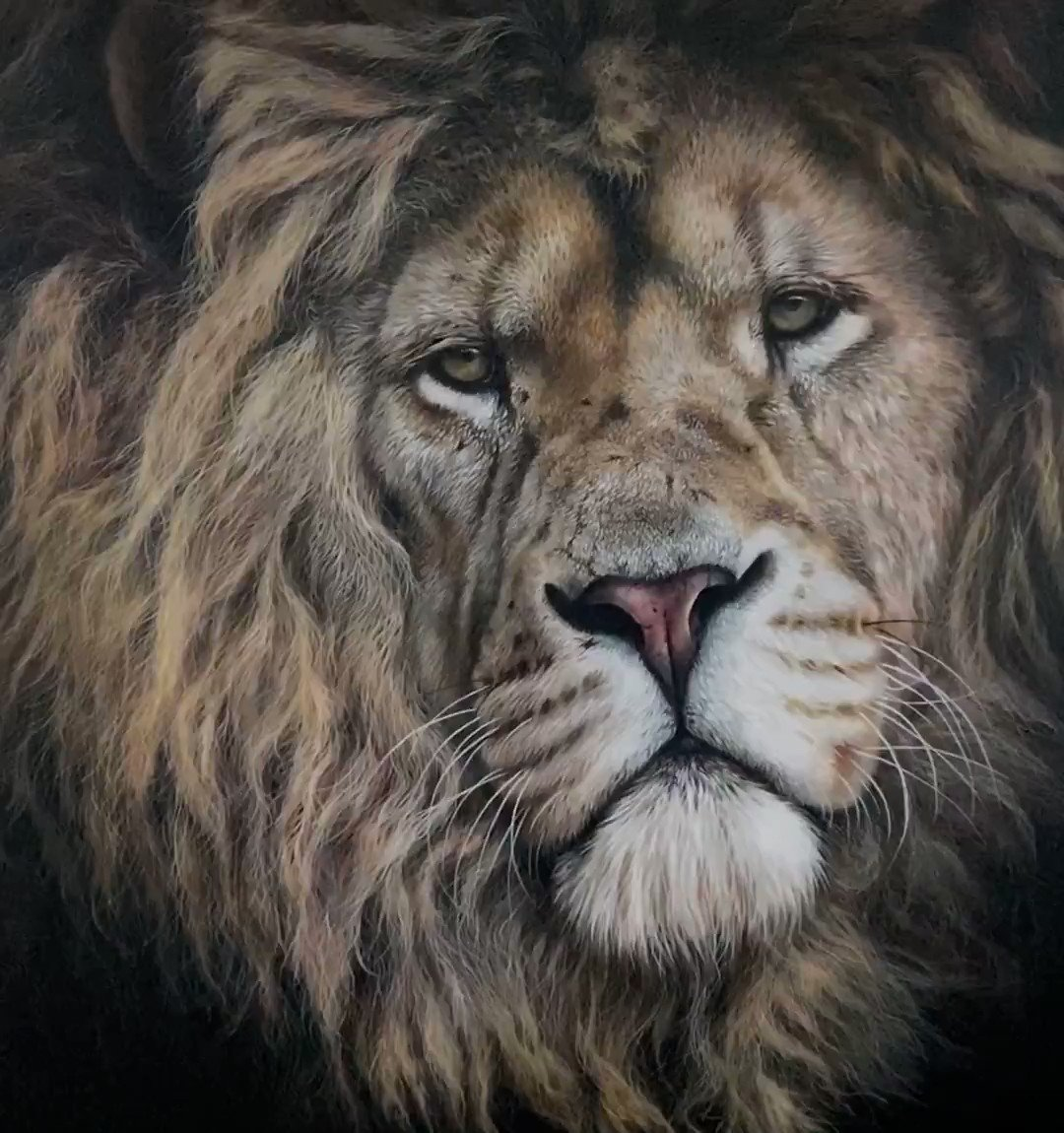 A close-up look at my big lion painting....(1m x 1m Acrylic on canvas) hope you like him! 🦁 🐾 🐾   #lionart #malelion #lovelions #art #artists #twitterartist #painting #ArtistaSocial #artworld #canvas #realism #hyperrealart