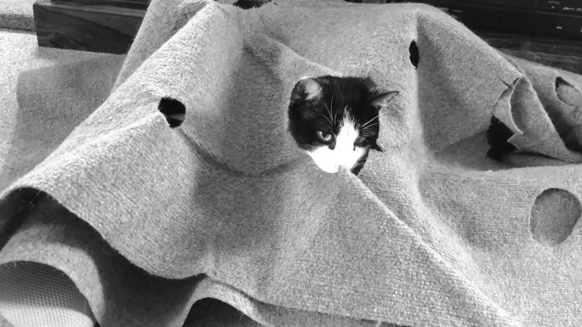 Mac the carpet monster strikes again!! 🙀 #spooky #cats #catsoftwitter #catsnoirfriday #catsofinstagram #catmonster