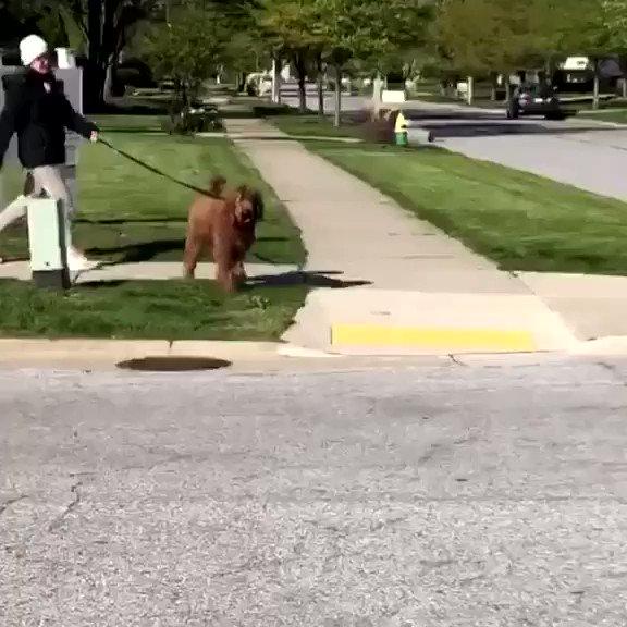 Replying to @buitengebieden_: The way this dog crossing the street..