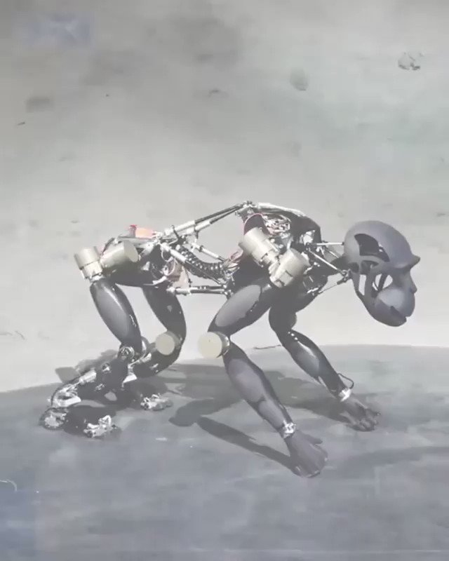 Charlie is a legged robot that can switch between quadrupedal and bipedal locomotion. Just like a chimp, it moves around on all fours, and when it needs to grasp something, it uses its forelimbs @DFKI. And you spot was terrifying! #AI #Robots #robotics