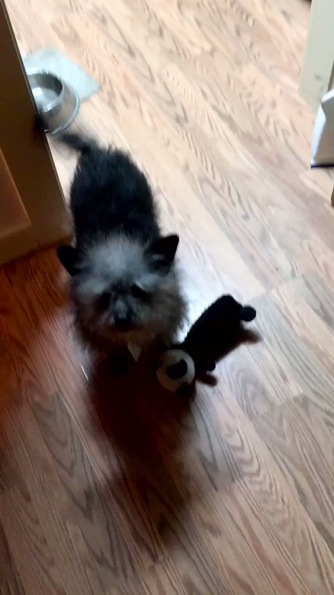 #ShavuaTov #SundayFunday #SundayThoughts #SundayMotivation wot eva yoo dus today b sure to check in wiff yoo 🐼  #BeKind hairry  #ZSHQ #PalsPorch #OTLFP #FurryTails #Weeti #TheRuffRiderz #BeMoreToddy #OneForAll #DogsOfTwitter #FurryTides #CatsOfTwitter #Anipals #zzst #TheAviators
