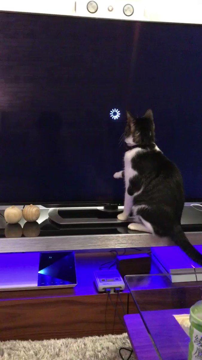 動画のロードが長すぎて不安になる猫