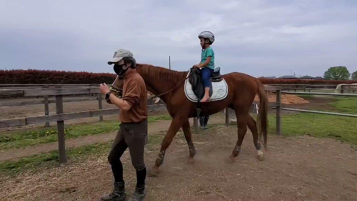 始動したマルコメくん騎手とジョージ兄さんをガン見してるぶー様とアオちゃん😂 #ソフト競馬 #馬 #高齢馬 #余生 #養老馬 #horsespace紡