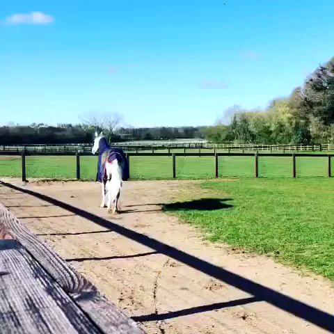 Lord Glitters and firmament enjoyed their first day back out in the paddock yesterday!! #summeriscoming 🌞 @StudElwick @gallop_racing