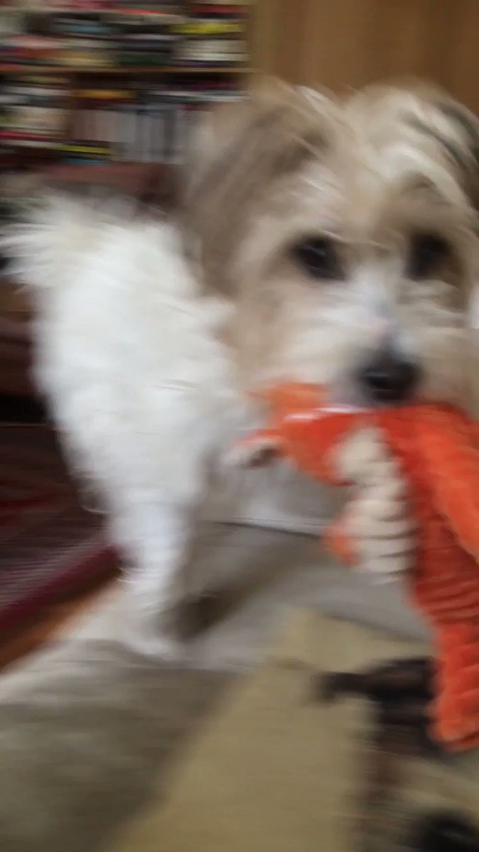 Attack Of The Killer Muppet. Watch for the moment IT lunges, fangs drooling.... https://t.co/oKgFuS654Q