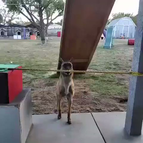 "Dogs are the best!  Especially 'barkour"" Monkey.. 🔥 https://t.co/sJQIBGm21v"