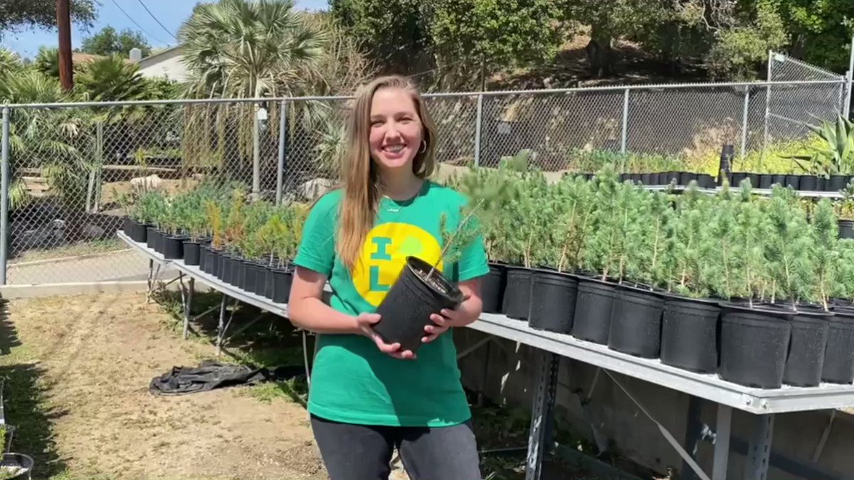 So honored to have the opportunity to work with partners like City Plants who are working hard every day giving Angelinos so much more than trees!  #climateactioncorps https://t.co/t17FAilE76