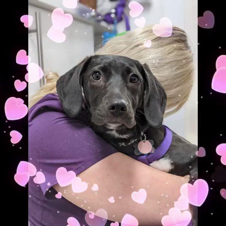 Stella Is Such A Sweetheart #DogsofTwittter #dogsoftwitter #doglife #DogLover #dogloversclub #veterinary #fridaymorning #FridayThoughts #cutepets #petsarefamily  https://t.co/h5v6H8fc3K https://t.co/wVadiGpgcM