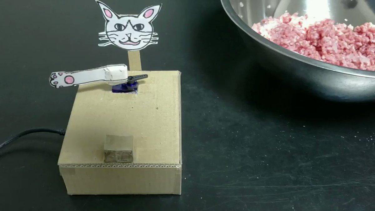 手作り感満載のすり切り!?大さじ1をすり切ってくれる猫がシュールすぎる!