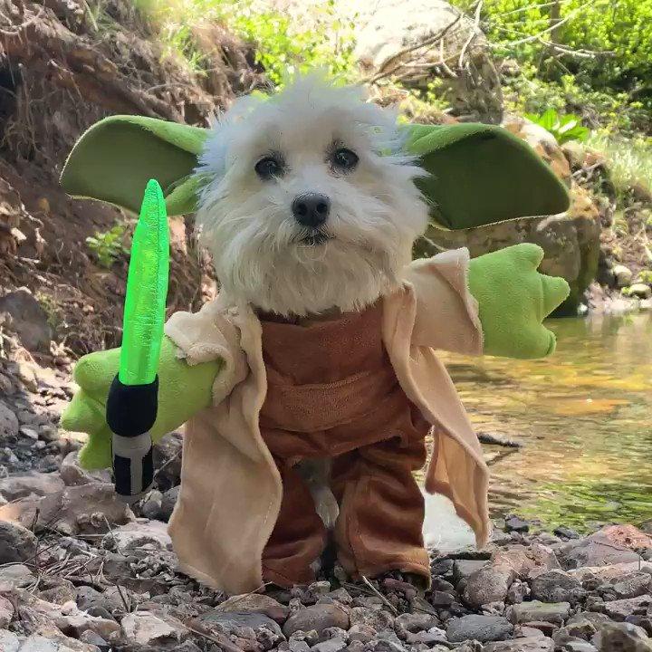 Baby Yoda meets Bruiser Yoda meets cuteness overload  😍🐶🤩  #MayThe4thBeWithYou  @pbj_pack   https://t.co/iuf7VTWNc9 https://t.co/2Dzjmh8BBD