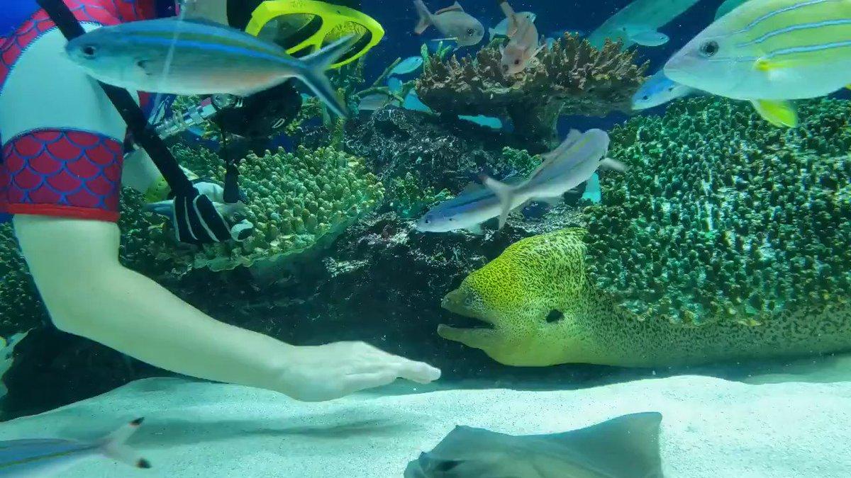 海のギャング「ウツボ」実は大人しい性格??餌やり風景が穏やかすぎる!