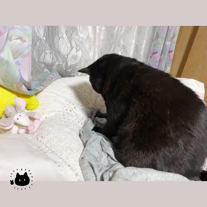 いつまでも見ていられる!飼い主のカーディガンを無心でコネコネし続ける猫さんw