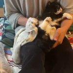 猫のもんちゃんは、おしりふきが苦手!飼い主さんにぎゅっとつかむ手がかわいすぎる