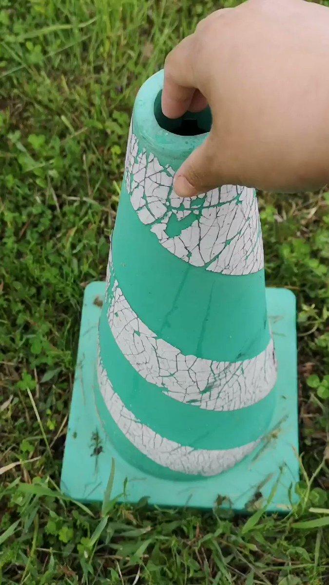 パイロンの中に小鳥の巣が・・・!かわいい小鳥にご注目