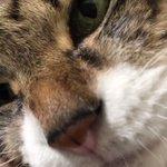 猫ががっちり腕を掴んで来る様子がうらやましい!