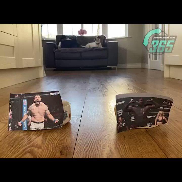 💥🐶 PET PREDICTIONS 🐶💥  It's predictions time! Watch as our MMAPlay365 pet, Reggie, predicts the #UFCVegas28 main event, Jairzinho Rozenstruik vs Augusto Sakai‼️  Who have you got?  #UFCBettingAdvice #UFC #PetPredictions #JairzinhoRozenstruik #AugustoSakai #Rozenstruik #Sakai https://t.co/1vZ5wjl0F2