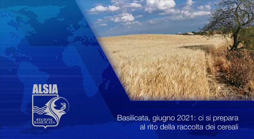 """#cerealicoltura, in #Basilicata ci si prepara al """"..."""