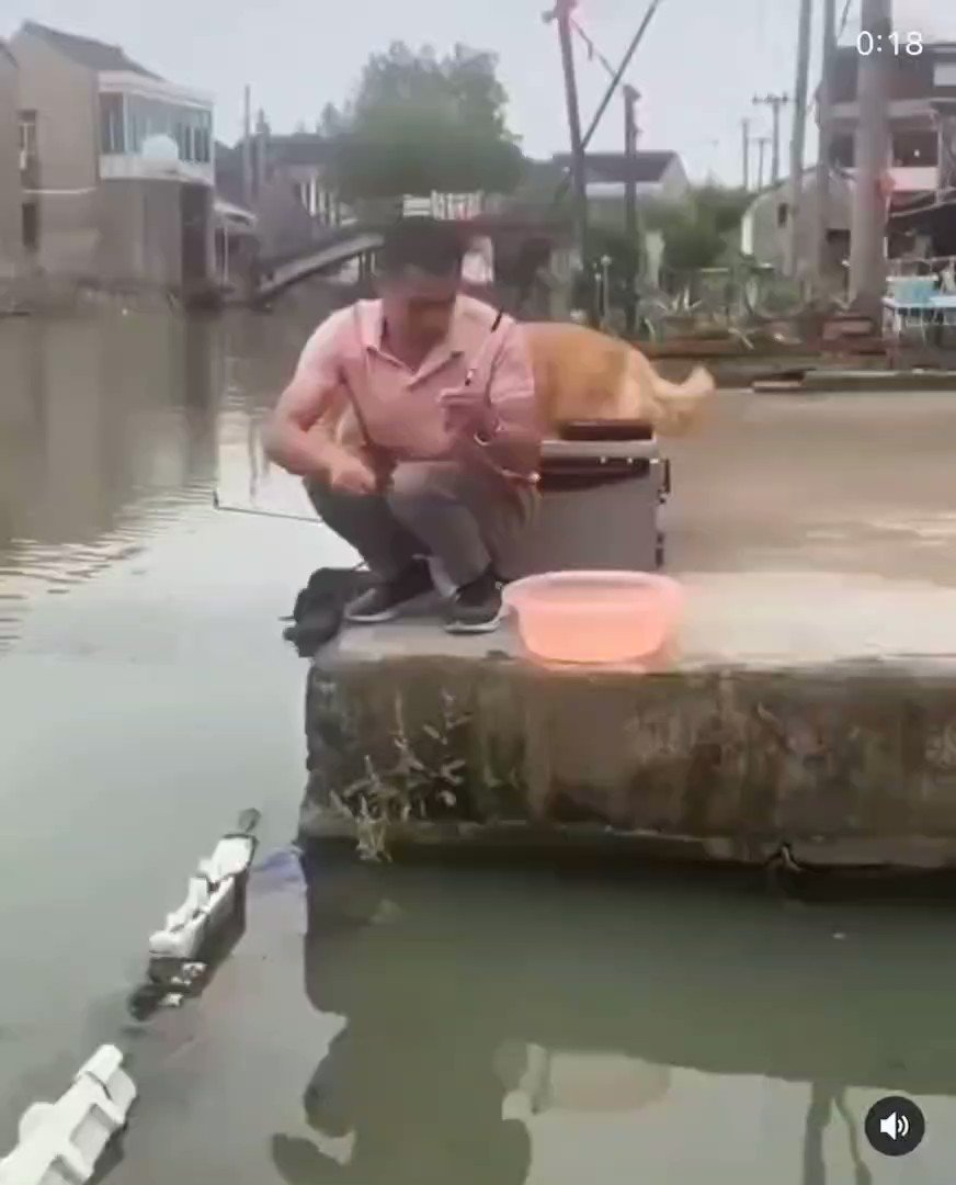 Dog saves a fish from dying 👍Like our Page for next Intresting post😎  #amazing #Interesting #stunning #naturephotography #explorepage #explore #animals #Facts #Awesome #Fascinating #your #damnit #nature #ocean #USA #foryou #impossible #amazingvideos #dubai #uae https://t.co/a0A00Po8It