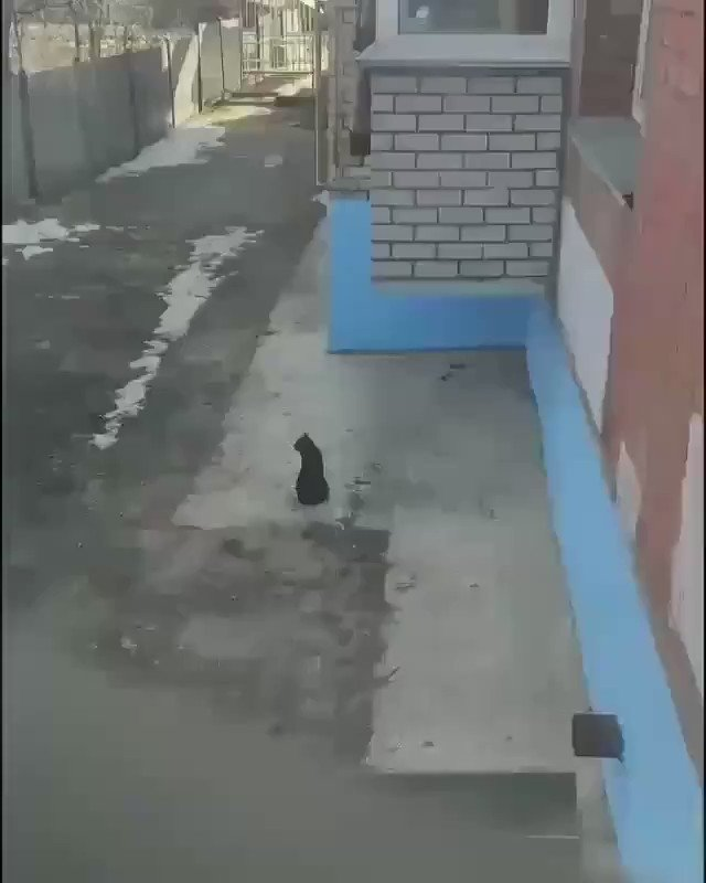 When...a cat owner is too lazy to run downstairs and open up the door 😃😄😂  #ViralVideo @Viral_GIFs #cats #ViralVideos https://t.co/AYFZmH88DQ