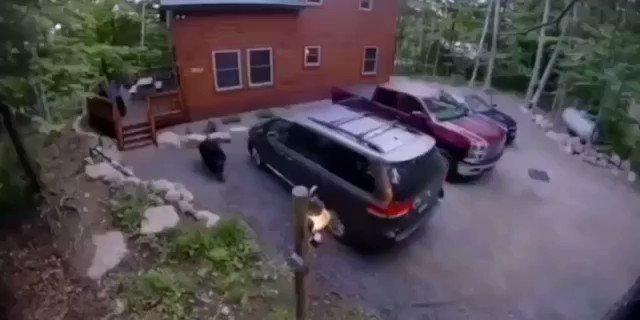 #Viral Una mamá oso abre la minivan de una familia y mete a sus bebés para que duerman. El video fue captado en 2019, pero es ahora cuando se ha viralizado y habría ocurrido en los bosques montañosos en el noreste del estado de Nueva York.  Créditos: ADN40 https://t.co/ektOdrvsEN
