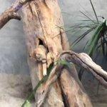 kobe_doubutsuのサムネイル画像