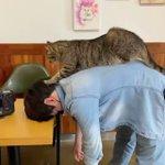 猫による血行促進やリラックス効果が得られる極上のマッサージ!