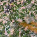 monta77396800のサムネイル画像