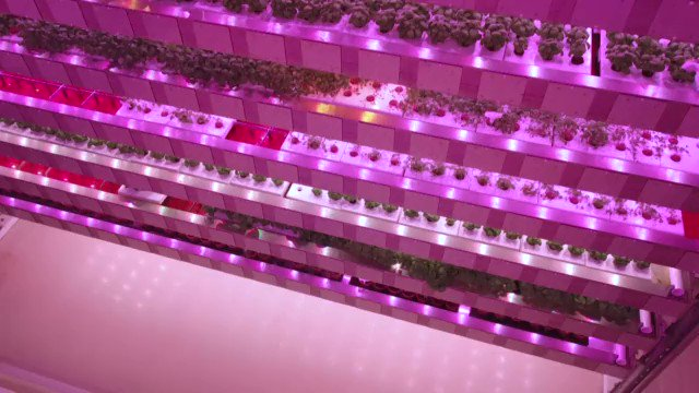 VIDEO: There's no soil and no sunshine France's first 'vertical farm' will soon supply supermarket chain Monoprix and expects to eventually produce eight million plants a year without any of them ever seeing the light of day https://t.co/NLta6yEf9f