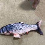 愛猫のおもちゃに動く魚をプレゼントしたら…。勢いが凄すぎて立っちゃったw