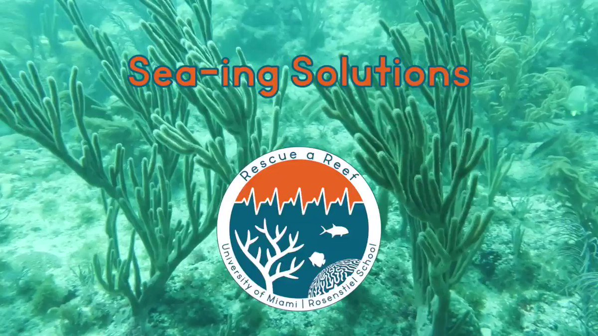 Image for the Tweet beginning: Sea-ing Solutions Part I🐠 As we