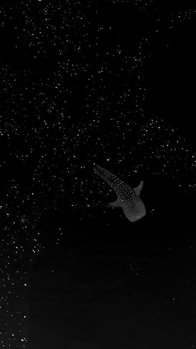 「星空を泳ぐジンベイザメ」 Star Shark, floating through space instagram.com/reel/CPQKtWSnO… とても静かな海でドローンによる撮影。星のようにみえるのは藻類の出す気泡だそう。神秘的。