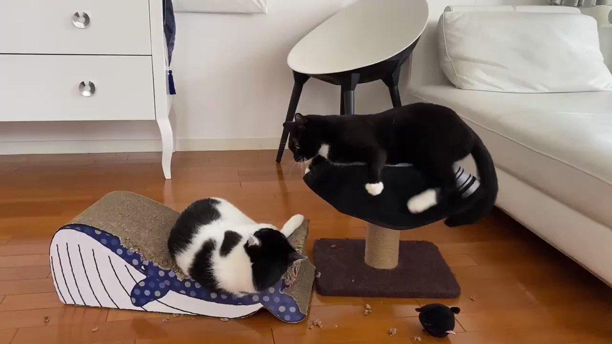 黒猫「そなたに力を授けてしんぜようぞ」